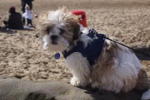 Puppy March14 (08)